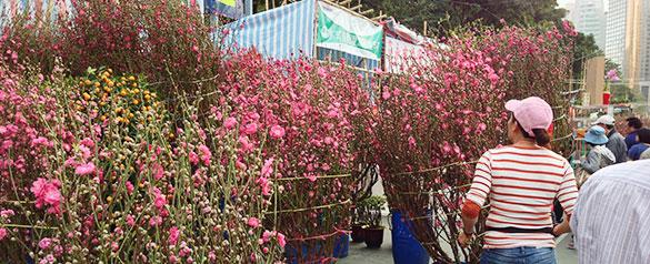 桃の花 - 2014年春節